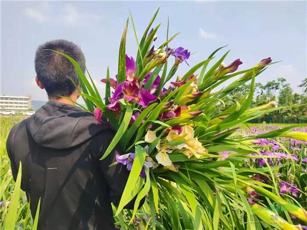 第三届全国鸢尾产业发展学术研讨会将在杭州召开