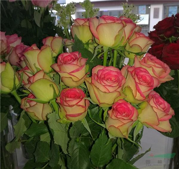 中国植物新品种保护(花卉)国际论坛即将在昆举办