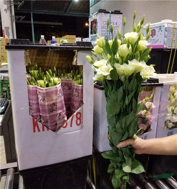 我国花卉进出口稳中向好 去年贸易总额达6.22亿美元