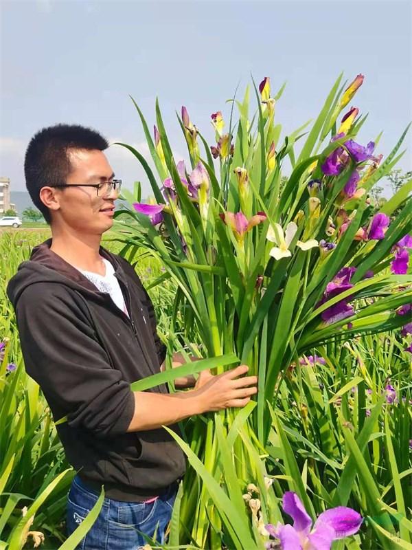 我国鸢尾生产种植面积突破万亩