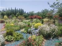 首届中国国际花境大赛作品:《花漾湖畔》精彩呈现湿地之美