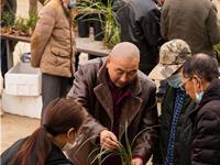 随州兰花产业蓬勃发展  年交易额突破10亿元