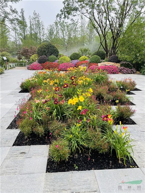 换新花 展新姿 中国花卉博览会上海园换花突出萱草新品种亮色